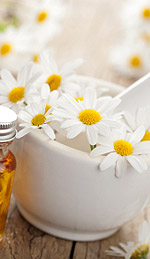 Roman Chamomile Oil and Clinical Treatment of Insomnia
