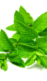 Spearmint Oil Can Help with Menstrual Strain and Fatigue